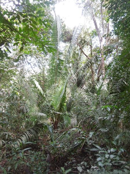 belize-jungle-29