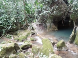 belize-jungle-33