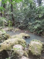 belize-jungle-34