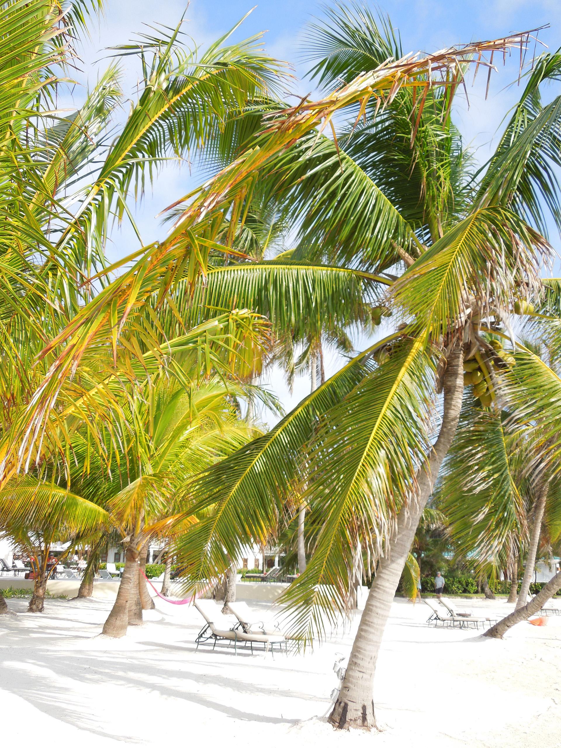 Belize-San_Pedro-43