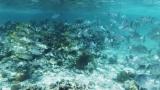 Belize-San_Pedro-18