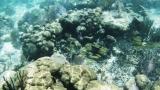 Belize-San_Pedro-19