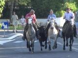 bull-run-20