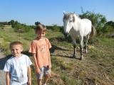 bull-run-41