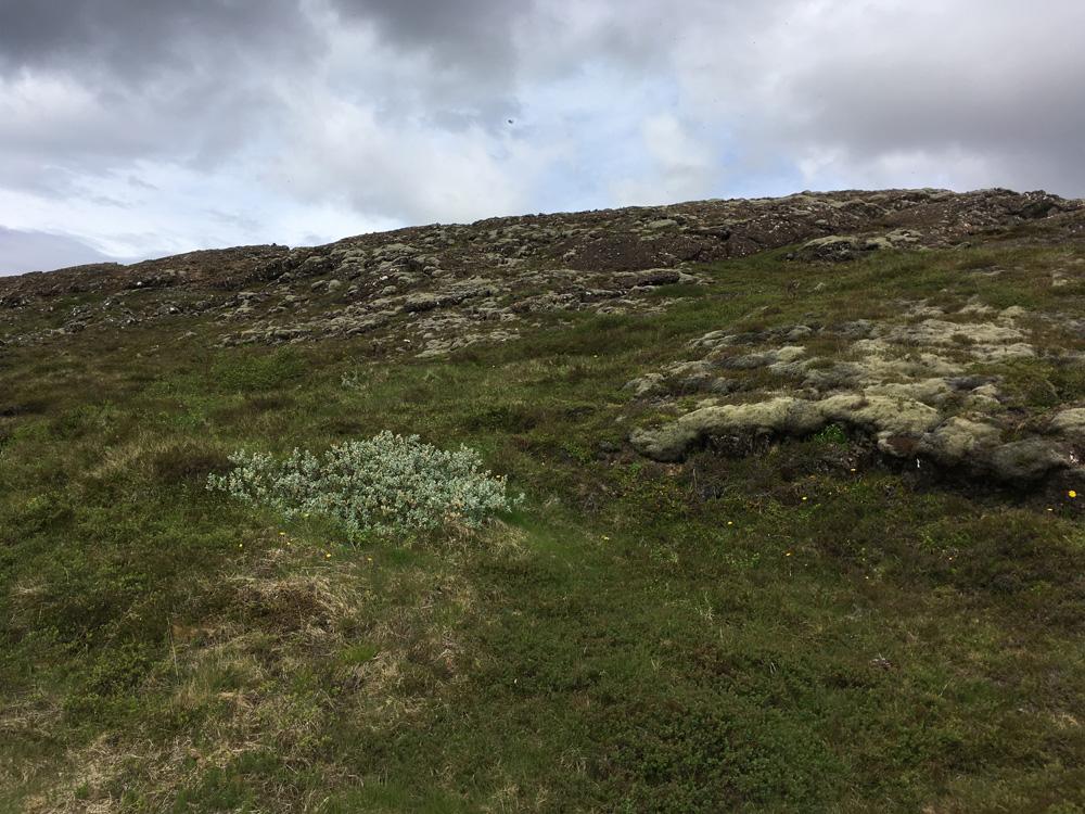 Iceland-Land- (272)