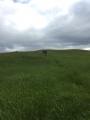 Iceland-Land- (1)