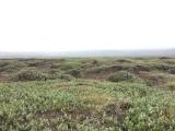 Iceland-Land- (109)