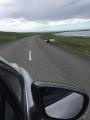 Iceland-Land- (80)