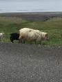 Iceland-Land- (81)