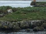 Iceland_Sea (160)