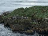 Iceland_Sea (164)